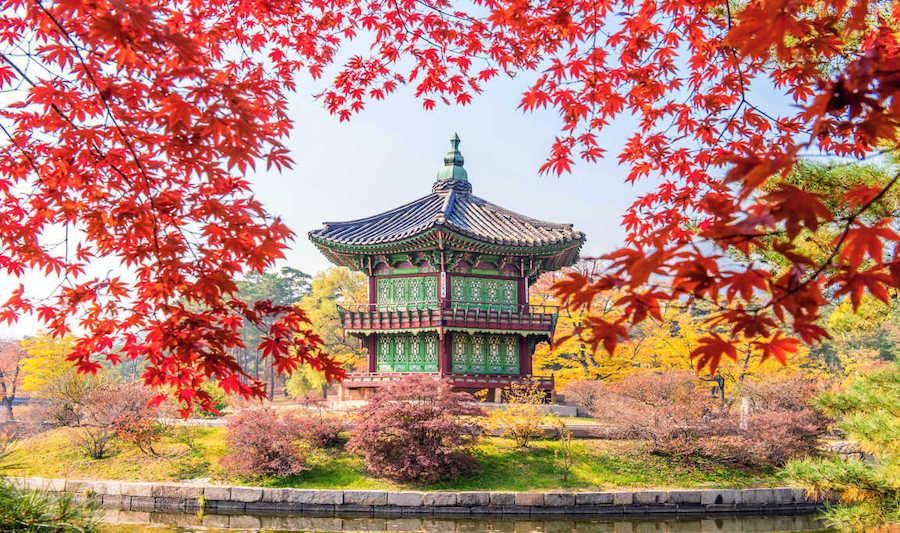 han-quoc-chuong-trinh-tham-quan-xu-so-kim-chi-4n3d